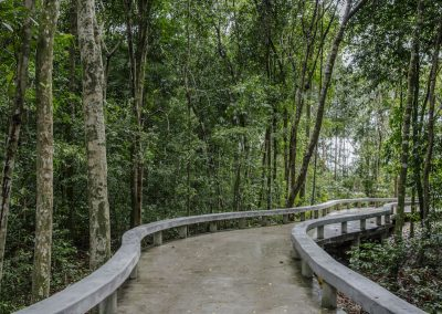 Elevated walkway through forest